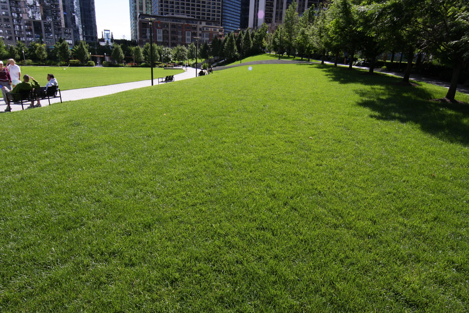 Grassy knolls in the park