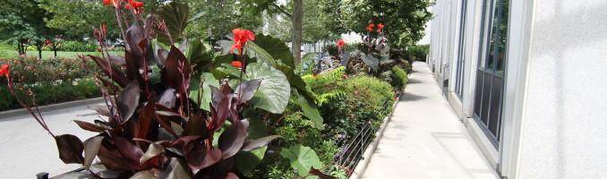 Lancaster planters in full summer bloom