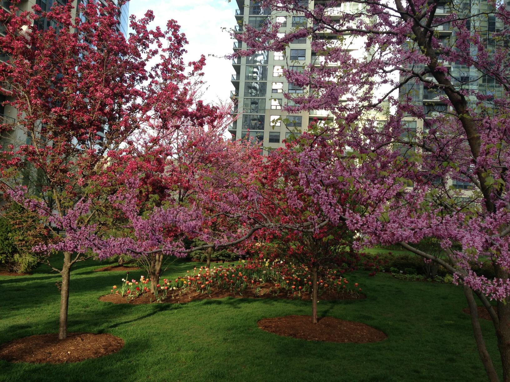 Springtime in LSE Park