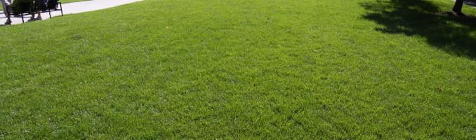 Grassy knolls in LSE Park