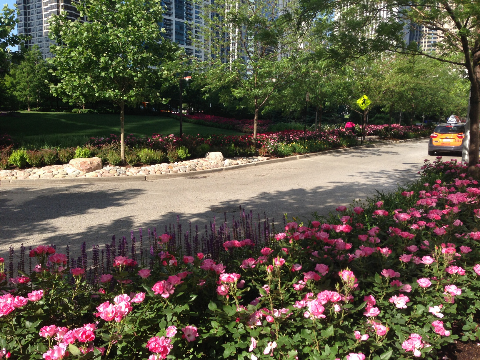 Roses in LSE Park